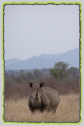 Tours and Safaris to the Pilanesberg National Park. Big 5 Game Reserve in South Africa.