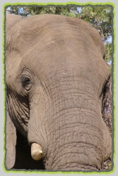 Pilanesberg Safaris and Tours in South Africa.