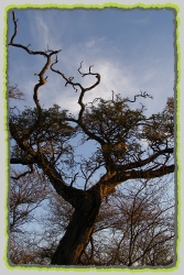 Tree Species of the Pilanesberg National Park. Pilanesberg Trees.